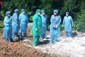 Tây Ninh phát hiện ổ dịch tả lợn châu Phi đầu tiên
