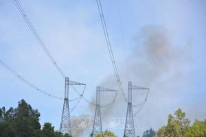 Cháy rừng miền Trung đe dọa ngành Điện