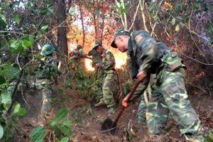 Giúp dân dập lửa cứu rừng