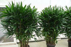 Kì lạ 5 loại cây cảnh phong thủy có khả năng chống ung thư