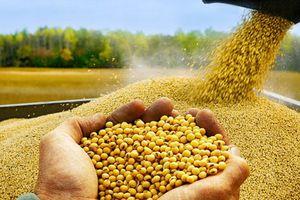 Ngành nông nghiệp Mỹ đau đầu với cơn ác mộng tồi tệ nhất 2 thập kỷ