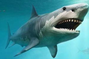 Nguyên nhân tuyệt chủng của loài cá mập quái vật thời tiền sử nặng gấp 5 xe buýt
