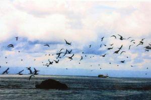 Người lính biển và 5 ngàn ngày ở 'quần đảo bão tố'