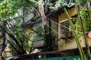 Kỳ lạ lối kiến trúc 'cây mọc xuyên nhà' ở khu tập thể cũ Hà Nội