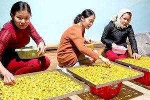 Nghệ An: Cần bảo tồn, nhân rộng giống trà quý
