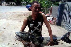 Bắt được cá ghé 'khủng' trên thượng nguồn Nậm Nơn