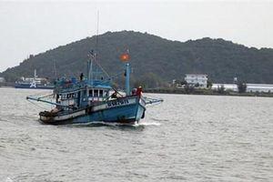 Gỡ 'thẻ vàng' của EC - nhiệm vụ quan trọng của ngành thủy sản