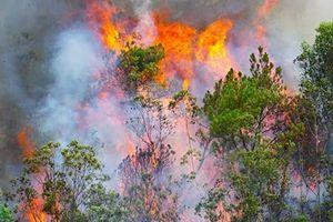 Đêm nay (9/7), những trận mưa vàng giải cứu cháy rừng tại miền Trung