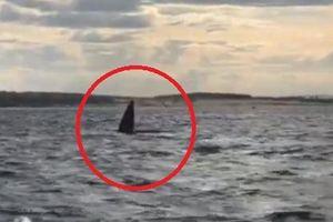 Clip: Người dân phấn khích khi thấy cá voi xuất hiện ở Quy Nhơn