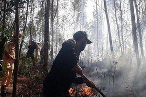 Bình Định: Rừng keo bùng cháy giữa trưa, hơn 400 người nỗ lực dập lửa