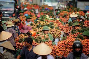 Thắng lớn vải thiều Bắc Giang đạt doanh thu khủng hơn 6.000 tỷ đồng