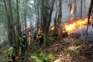 Khởi tố người phụ nữ đốt cỏ dẫn đến cháy rừng kinh hoàng ở Hà Tĩnh