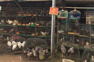 Chùm ảnh: Chợ chim trời lớn nhất ở miền Tây