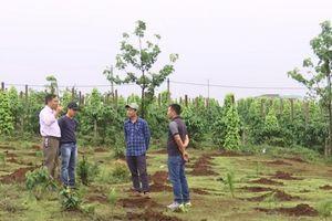 Biến đất rừng thành đất nhà: Khởi tố thêm 3 bị can tại Gia Lai
