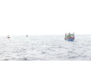 Phát hiện lưới trùm tàu cá Nghệ An bị chìm trên biển Bạch Long Vỹ