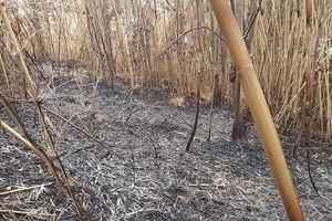 Quảng Ngãi: Cháy rừng giáp ranh giữa huyện Đức Phổ, Nghĩa Hành