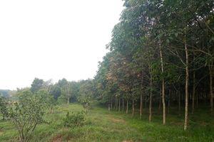 Quảng Trị: Mất thêm gần 35 ha rừng phòng hộ