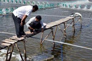 Huyện Cái Nước dồn nguồn lực chăm lo cho người nghèo