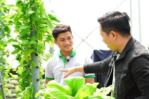 Nhóm bạn trẻ 9X khởi nghiệp với máy trồng rau sạch trên không trung
