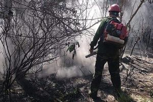 Hà Tĩnh: Khởi tố đối tượng gây cháy rừng tại huyện Hương Sơn