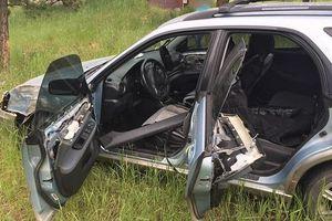 Gấu đột nhập xe hơi, 'lái' đi chơi rồi gây tai nạn