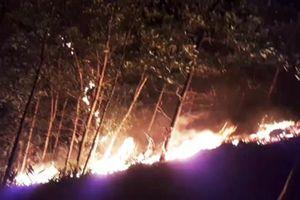 24 giờ nỗ lực dập tắt vụ cháy rừng ở Quảng Nam