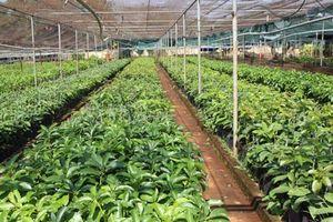 Cần hướng đến xuất khẩu giống nông nghiệp
