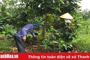 Xã Hoằng Khánh thực hiện nhiều giải pháp nâng cao thu nhập người dân
