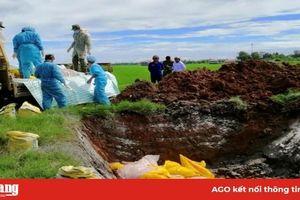 Chợ Mới phòng, chống bệnh dịch tả heo Châu Phi
