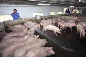 Áp dụng chăn nuôi an toàn sinh học phòng dịch tả lợn châu Phi