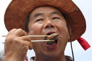Biểu tình đòi cấm thịt chó ở Hàn Quốc, chủ lò mổ mở tiệc cạnh bên