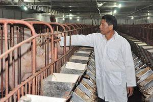 Chăn nuôi an toàn sinh học góp phần ngăn chặn dịch tả lợn châu Phi