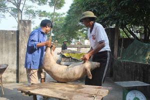 Đề xuất chính sách cho người chăn nuôi trong dịch tả lợn châu Phi