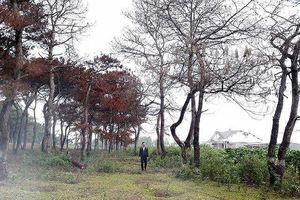 Gia Lai: Khởi tố thêm 3 cán bộ liên quan đến sai phạm tại BQL rừng phòng hộ Bắc Biển Hồ