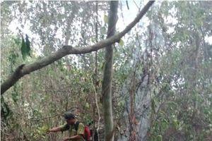Chỉ trong một ngày trên địa bàn toàn tỉnh Quảng Ngãi xảy ra liên tiếp ba vụ cháy rừng