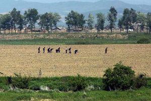 Triều Tiên lo mất mùa vì hạn hán kéo dài nghiêm trọng