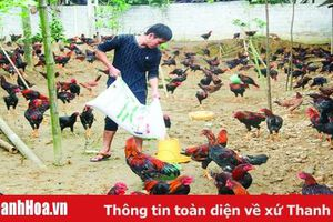 Phát triển chăn nuôi theo hướng an toàn sinh học