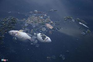 Nước sông Tô Lịch lại đen kịt, cá chết dày đặc