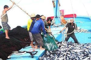 Chống đánh bắt cá bất hợp pháp là nhiệm vụ quan trọng hàng đầu