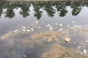 Cá chết nổi trắng bờ sông Tô Lịch, sau khi nhận nước từ Hồ Tây