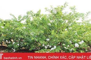 Rời quân ngũ, bắt tay làm vườn mẫu cho thu nhập cao ở Nghi Xuân