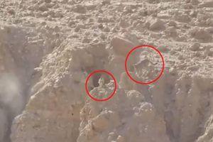 Màn rượt đuổi nghẹt thở giữa chó sói và dê núi trên vách đá cheo leo