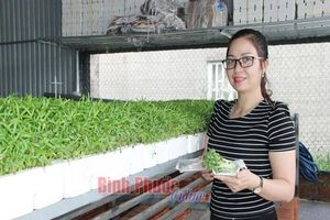 Chỉ trồng 500m2 rau mầm, cặp vợ chồng lãi 700 ngàn đồng/ngày