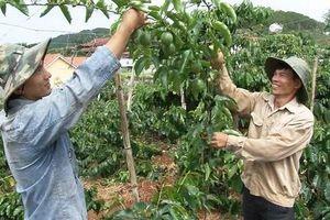 Lâm Đồng: Nhiều chính sách hỗ trợ người nghèo