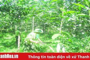 Thực hiện đồng bộ các biện pháp giữ rừng mùa nắng nóng