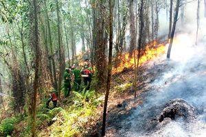 Hàng loạt vụ cháy rừng liên tiếp xảy ra ở Hà Tĩnh: Tập trung điều tra nguyên nhân