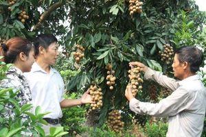 NN ĐBSH: Xúc tiến thương mại, quảng bá nông sản