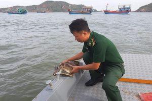 Vận động người dân thả cá thể rùa biển về môi trường thiên nhiên