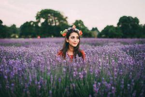 Lạ lùng chủ cánh đồng hoa oải hương khuyên du khách không nên đến vào cuối tuần