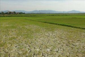 Hàng chục nghìn ha lúa, cây màu đối mặt với hạn hán, xâm nhập mặn